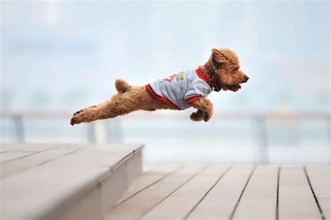 tap     flying dog brewery bucks happening