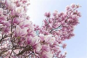 Magnolie Blüht Nicht : forum plauderecke kaffeepause dawanda ~ Buech-reservation.com Haus und Dekorationen