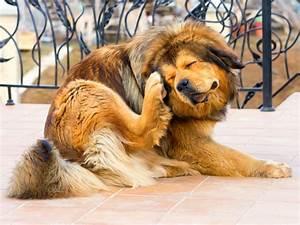 Pasos para acabar con las pulgas de tu perro de una vez por todas