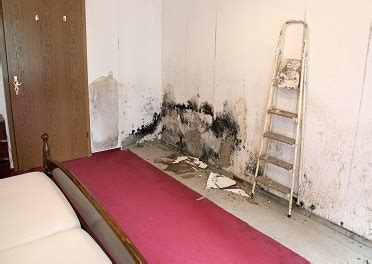 cdc indoor environmental quality dampness  mold