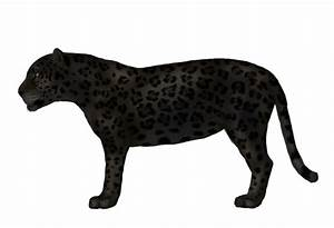 How to Draw Animals: Big Cats, Their Anatomy and Patterns ...