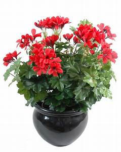 Plantes Pas Cher Paris : geranium lierre rouge artificiel plantes artificielles ~ Dailycaller-alerts.com Idées de Décoration