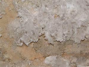 Weißer Schimmel An Der Wand : wei er schimmel wo sie ihn finden und warum er so ~ Michelbontemps.com Haus und Dekorationen