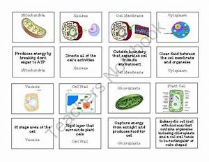 Plant And Animal Cell Organelles Memory Game From Sandy U0026 39 S