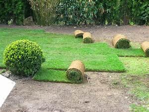 Rasen Richtig Anlegen : rollrasen verlegen rollrasen verlegen zeigt wie es geht ~ Lizthompson.info Haus und Dekorationen