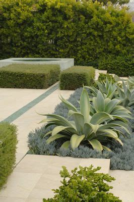 agave tree and landscape artecho architecture and landscape architecture agave plants plants pinterest gardens