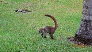 Tiere Im Garten Begraben : viele komische tiere im garten tun nix grand palladium ~ Lizthompson.info Haus und Dekorationen