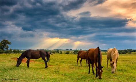 how do horses live where do horses live joy of animals