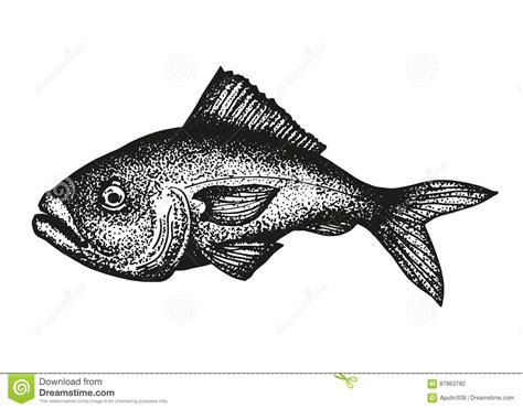 grouper fish sketch vector drawing preview