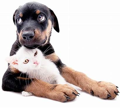 Kitten Puppy Care Dog Cardiology Cardiac Animal