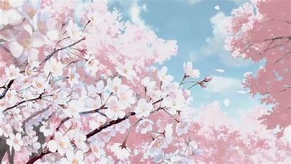 Anime Aesthetic Blossom Cherry Desktop Gifs Backgrounds