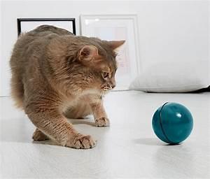 Spielzeug Online Bestellen : katzen spielzeug rollball online bestellen bei tchibo 335155 ~ Orissabook.com Haus und Dekorationen