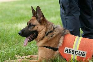 dog rescues in washington my dog rescue