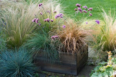 Planting A Drought Resistant Box