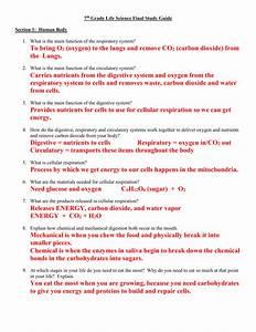Respiratory System Exam Fever Study Guide