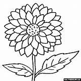 Coloring Flowers Dahlia sketch template