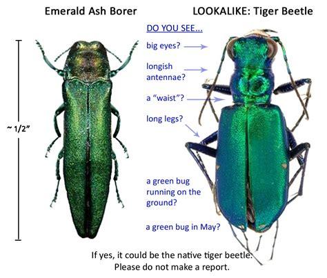 emerald ash borer eab report form pest survey caps