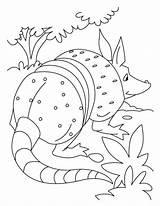 Anteater Coloring Popular Dangerous Library Clipart Clip Coloringhome sketch template