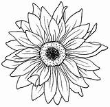 Coloring Drawing Pages Flower Aster Sunflower Tattoo Simple Flowers Tattoos Blooming Bulk Digital Drawings Adult Stencil Template Line Colouring Printable sketch template