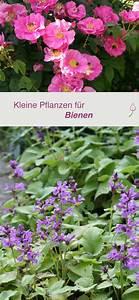Welche Pflanzen Gegen Wespen : 6071 besten garten bilder auf pinterest garten ideen ~ Lizthompson.info Haus und Dekorationen