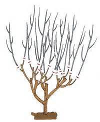 Gartenhibiskus Vermehren Stecklinge : die besten 25 hibiskus schneiden ideen auf pinterest ~ Lizthompson.info Haus und Dekorationen