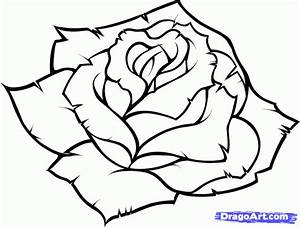 How to Draw a Blue Rose, Step by Step, Flowers, Pop ...