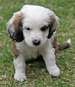 The 25+ best Mixed breed puppies ideas on Pinterest | Cute ...