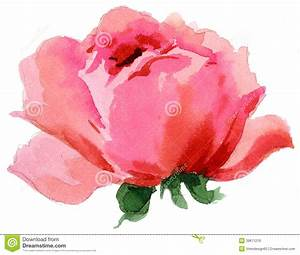 Watercolor Painting Of Beautiful Single Rose Stock ...