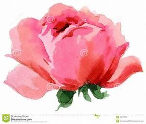 Watercolor Painting Of Beautiful Single Rose Stock ...