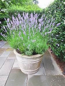 Lavendel Pflanzen Balkon : lavendel pflanzen fuer sonnige und halbschattige balkons ~ Lizthompson.info Haus und Dekorationen