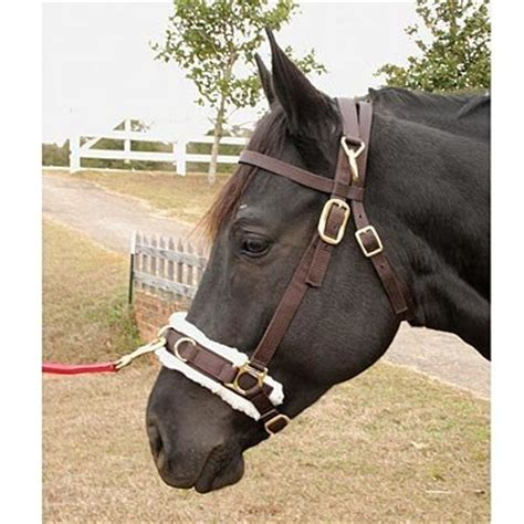 jeffers equine fully adjustable lunging caveson