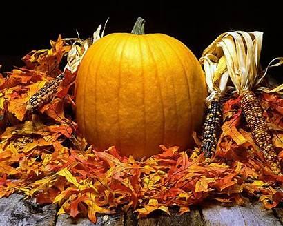 Pumpkins Fall Autumn Backgrounds Harvest Desktop Wallpapersafari