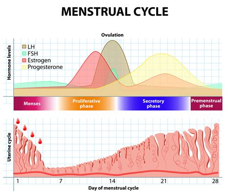 progesterone levels  early pregnancy