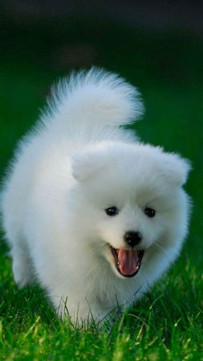 Puppy Wallpapers Iphone Running Dog Android Grassland