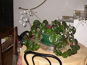Plante D Intérieur Pas Cher : plante d 39 interieur et de veranda le blog de capucine30 ~ Premium-room.com Idées de Décoration