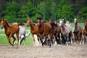 Bilder Von Pferden : pferd kosten f r anschaffung monatliche kosten im berblick ~ Frokenaadalensverden.com Haus und Dekorationen