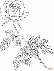 Immagini Da Colorare Rosa