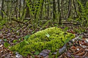 the forest floor With forrest flooring
