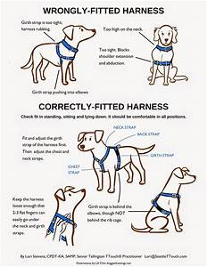 Easy Walk Harness Fitting Instructions, Easy, Get Free ...