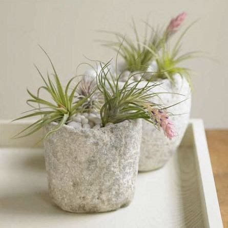 air growing plants 9 ideas for growing and displaying air plants babycenter blog