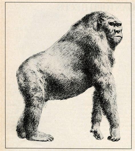 Bili Ape - Cryptid Wiki