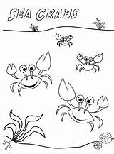 Crab Coloring Pages Template Printable Maryland Comments sketch template