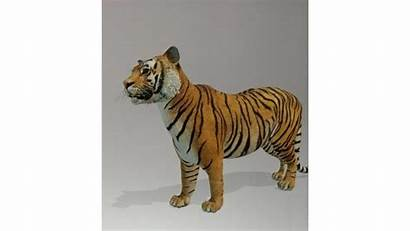 Tiger Google Animal Lion Favourite Shark Poll