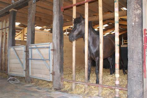 pension pour chevaux location de box moselle islandais de l albe