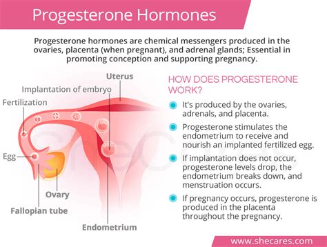 Normal Progesterone Levels Shecarescom