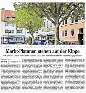 Neustädter Markt Hildesheim : gr ne f r erhalt der platanen auf dem neust dter markt fraktion im stadtrat hildesheim ~ Orissabook.com Haus und Dekorationen