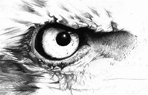 How to Draw a Realistic Bird Portrait in Pencil
