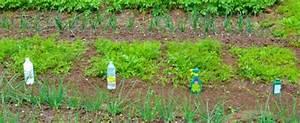 Désherbant Naturel Pour 600m2 : les d sherbants naturels l 39 essai comptoir des jardiniers ~ Nature-et-papiers.com Idées de Décoration