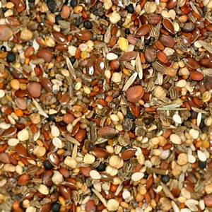 Graines De Tournesol Pour Oiseaux : graines de sant versele laga autres graines moulin giraud ~ Dailycaller-alerts.com Idées de Décoration