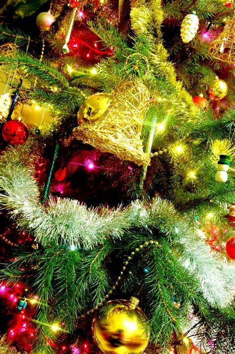 193 rbol de navidad descargar fotos gratis